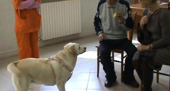 un cane durante un incontro di pet therapy